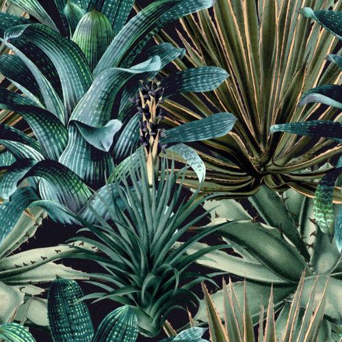 Lush Succulents