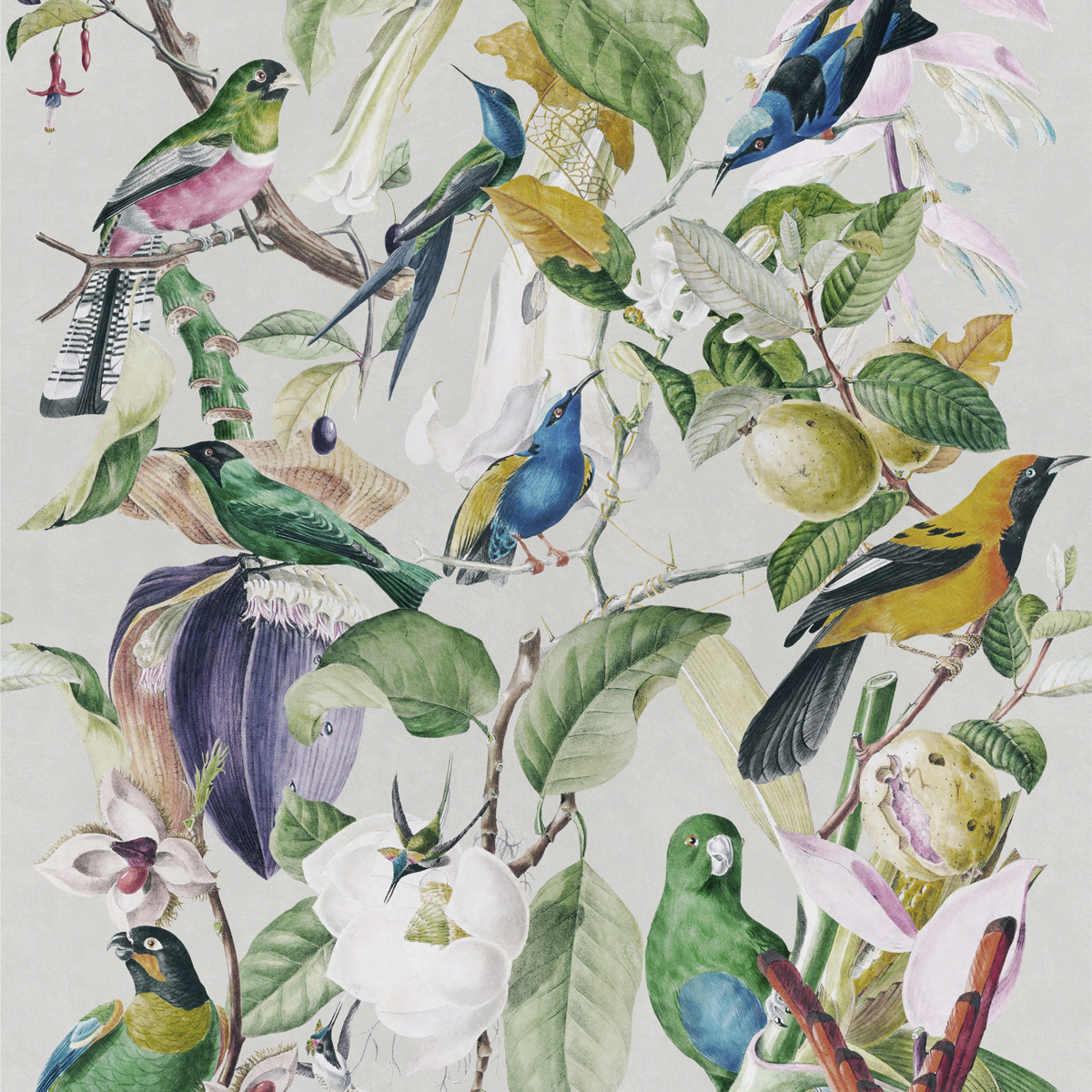 Mind The Gap Wallpaper Collection Tropical Birds Anna